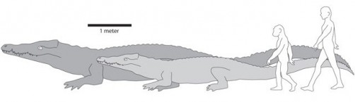 Newswise: UI Professor Identifies Largest Known Crocodile