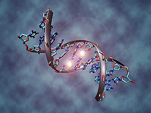 In this artist's rendering, a DNA molecule is methylated on both strands at the center cytosine. DNA methylation plays an important role in epigenetic...