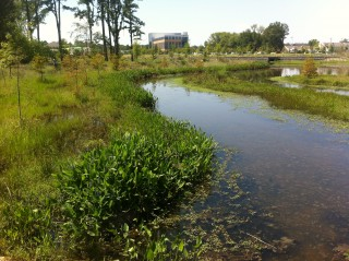 The low-impact development plan for the Lake Conway Urban Watershed includes stream restoration at The Village at Hendrix, next to Southwestern Energy...