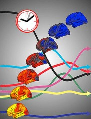 """Developmental clock"" shows increases and decreases in brain's cortical surface, as well as the dynamic cascade of many other brain measures, all changing..."