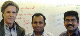 This is Kevin Foskett (left), Muniswamy Madesh (middle) and first author Karthik Mallilankaraman (right).
