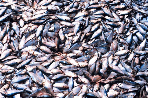 Newswise: Current Fisheries Management Jeopardizes Marine Ecosystems
