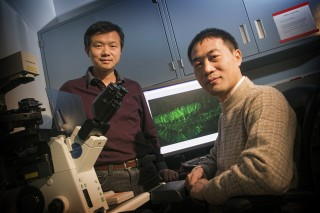 Dr. Shaoyu Ge and Yan Gu of Stony Brook University display the image of newborn neurons illustrated by the new optogenetic labeling and controlling technique.