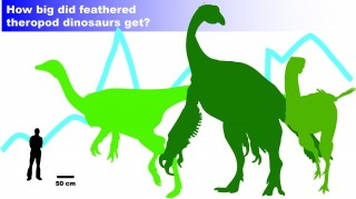 How Big Did Feathered Theropods Get?