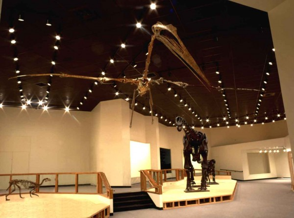 A fully articulated skeleton of Quetzalcoatlus hangs in the Museum of Texas Tech University. The animal stood as tall as a giraffe and needed a slope to taxi into the air.