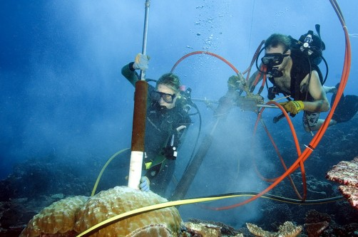 Newswise: Coral Records Suggest El Nino Activity Rises Above Background