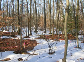 Research sites at the Harvard Forest Long-Term Ecological Research site in Petersham, Mass., where Frey and Melillo have been warming two sites with underground...