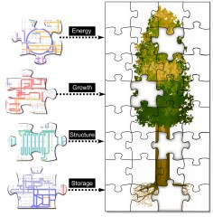 An extensive molecular map of poplar tree proteins from Oak Ridge National Laboratory offers new insight into the plant's biological processes.  Knowing...