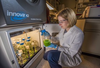 Truman Fellow Anne Ruffing looks at a flask of cyanobacteria with precipitated fatty acid floating on top. She has engineered two strains of cyanobacteria...