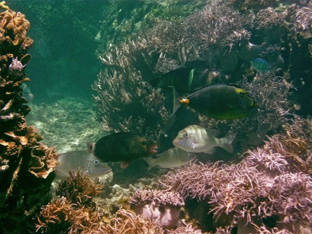 Newswise: Picky Eater Fish Clean Up Seaweeds From Coral Reefs