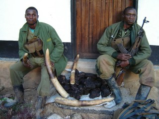 Guards with confiscated ivory from DR Congo's Okapi Faunal Reserve