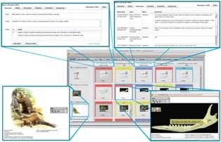 Screenshots of the phenomic matrix constructed in MorphoBank demonstrating the deep data documentation, including images describing traits and discussion...