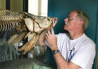 Dr. Donald Steward of the SUNY College of Environmental Science and Forestry examines an Arapaima skeleton.