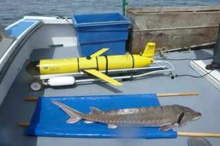 University of Delaware and Delaware State University researchers are using tools such as the OTIS underwater glider to pinpoint the ocean conditions that...