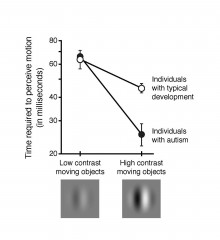 Children with autism detect motion under high contrast twice as quickly as their typically developing peers.