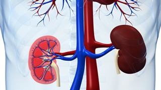 Newswise: Kidney Cancer Progression Linked to Shifts in Tumor Metabolism