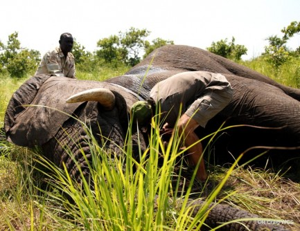 Newswise: South Sudan Expands Efforts to Protect Remaining Elephants
