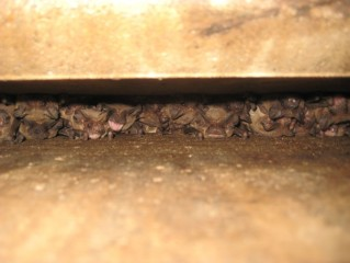 Bats like to hide in cracks and crevices such as this one.