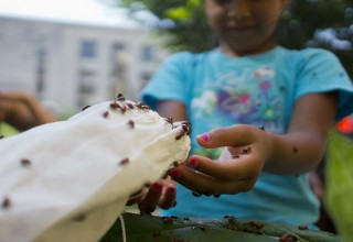 Ladybugs take a detour on their way to help Smithsonian gardens grow on the National Mall today. Children and adults were invited to participate as 9,000...