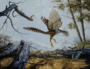 Archaeopteryx, believed to be a transitional species between theropod dinosaurs and birds, had longer forelimbs and shorter hind limbs than its ancestors.