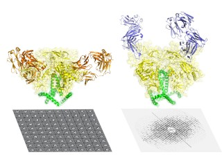 The HIV envelope protein has long been considered one of the most difficult targets in structural biology and of great value for medical science—particularly...