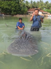 On October 8th, WCS researchers and staff members of the Karimunjawa National Park in Indonesia responded to an unusual situation: a juvenile whale shark...