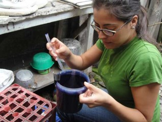 Anna Stewart Ibarra inspects an ovitrap in the patio of a study household to look for Aedes aegypti mosquito eggs. Ovitraps were monitored over a period...