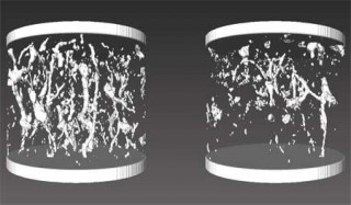3-D images of the macropore system in 10 cm-diameter, 8 cm-high soil cores taken from a heavy clay soil in Finland. Left: Control (non-compacted) soil....
