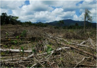 Recent narco-trafficking deforestation in a protected area of eastern Honduras.