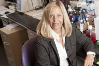 Gail Prins, professor of physiology and director of the andrology laboratory at the UIC College of Medicine