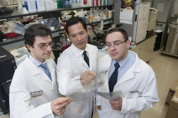 Drugs that broadly suppress the immune system after lung transplantation may inadvertently encourage organ rejection, according to a new study in mice. Pictured from left are study co-authors Daniel Kreisel, MD, PhD, Andrew Gelman, PhD, and Alexander Krupnick, MD, all at Washington University School of Medicine in St. Louis.