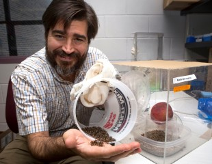 University of Florida insect physiologist Daniel Hahn displays the type of flies used to protect valued crops, in what is known as the sterile insect technique.