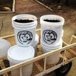 Used coffee grounds are placed in plastic 4-gallon containers  residents can pick up free of charge and use as compost in their gardens and landscapes.