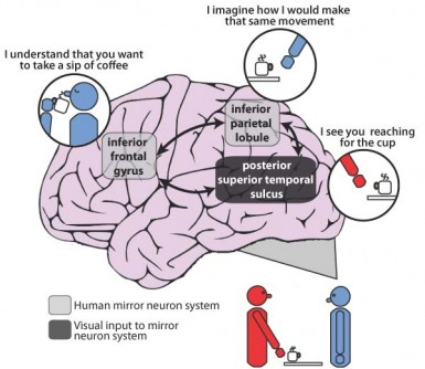Newswise: Brain Mapping Confirms Patients with Schizophrenia Have Impaired Ability to Imitate