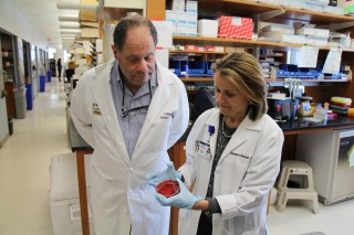 Phillip I. Tarr, MD, and Barbara B. Warner, MD, view an agar dish containing organisms sequenced in their study of gut bacteria in preterm babies. The researchers...