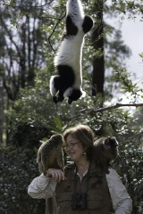 Dr. Patricia C. Wright is featured in the IMAX® film Island of Lemurs: Madagascar.  Dr. Wright founded Ranomafana National Park in Madagascar and now runs...