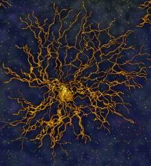 The star-shaped astrocyte