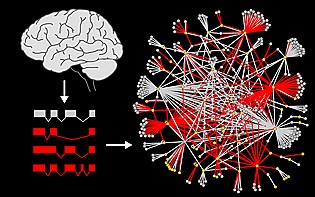 Splicing variants (red) of autism genes were cloned from the brain and screened for interactions. The image on the right represents the network of interactions....