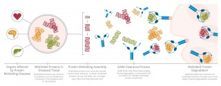 The graphic describes how GAIM-based molecules target multiple types of misfiled proteins simultaneously.