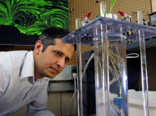 Zaki Jubery, a postdoctoral research associate in mechanical engineering, examines corn roots in a pressure chamber that measures the root system's water...