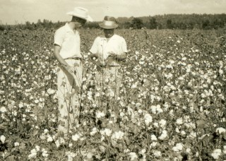Mississippi State University Extension Service agents spent many hours beside farmers in cotton fields as they waged war against invasive boll weevils,...
