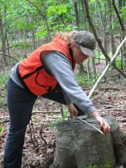 A member of the research team collects data in a northern hardwood forest.