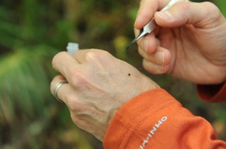 Dr. Kerry Clark, associate professor of public health at the University of North Florida, takes a close look at a tick.