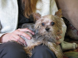 Tinkerbell is surviving several serious conditions due to veterinary care.
