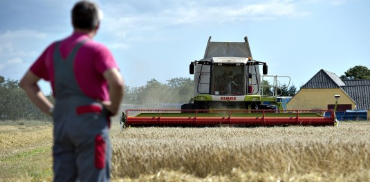 A Danish farmer watches the wheat harvest in 2011.