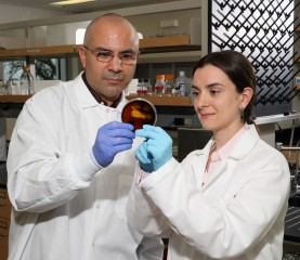 SDSU dairy science associate professor Ashraf Hassan and doctoral student Nuria Garcia are refining an enzyme extracted from a unique bacterial strain...