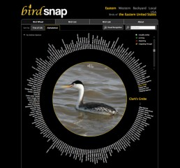 Screenshot of Birdsnap wheel of bird species