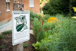 A rain garden feature blooms in midsummer outside Winston Hall on the campus of Wake Forest University on Thursday, July 25, 2013. The garden captures...