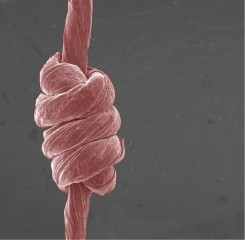 Strong, stretchable fibers made of graphene oxide can be knotted like yarn.
