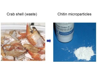 Researchers at FAU and their colleagues have developed an oral form of microparticles in crab and other crustacean shells as a dietary supplement that...